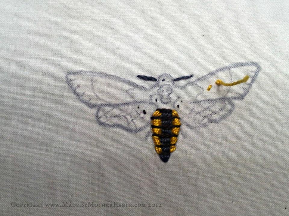 moth death head