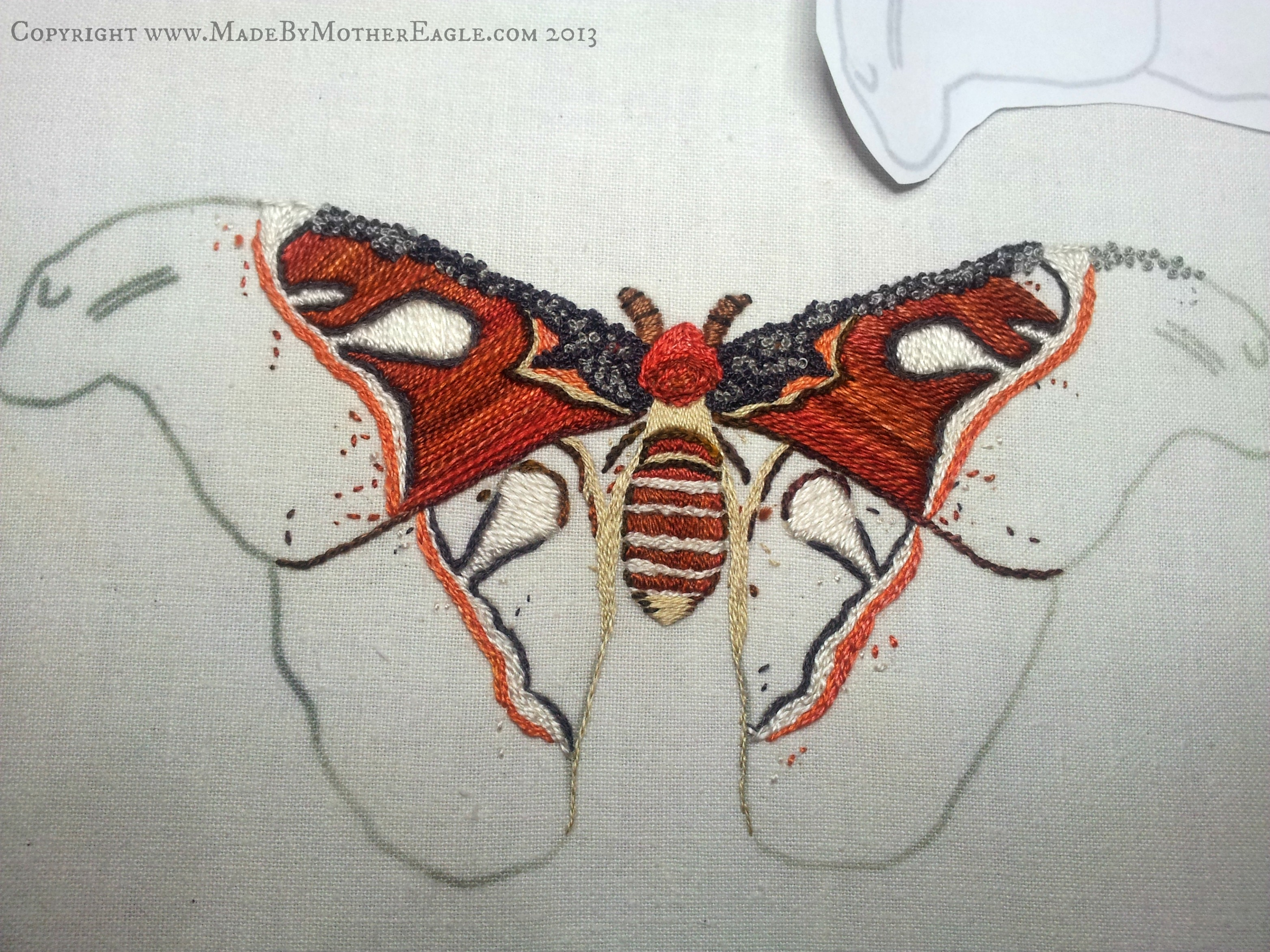 Atlas Moth Last Weeks Progress