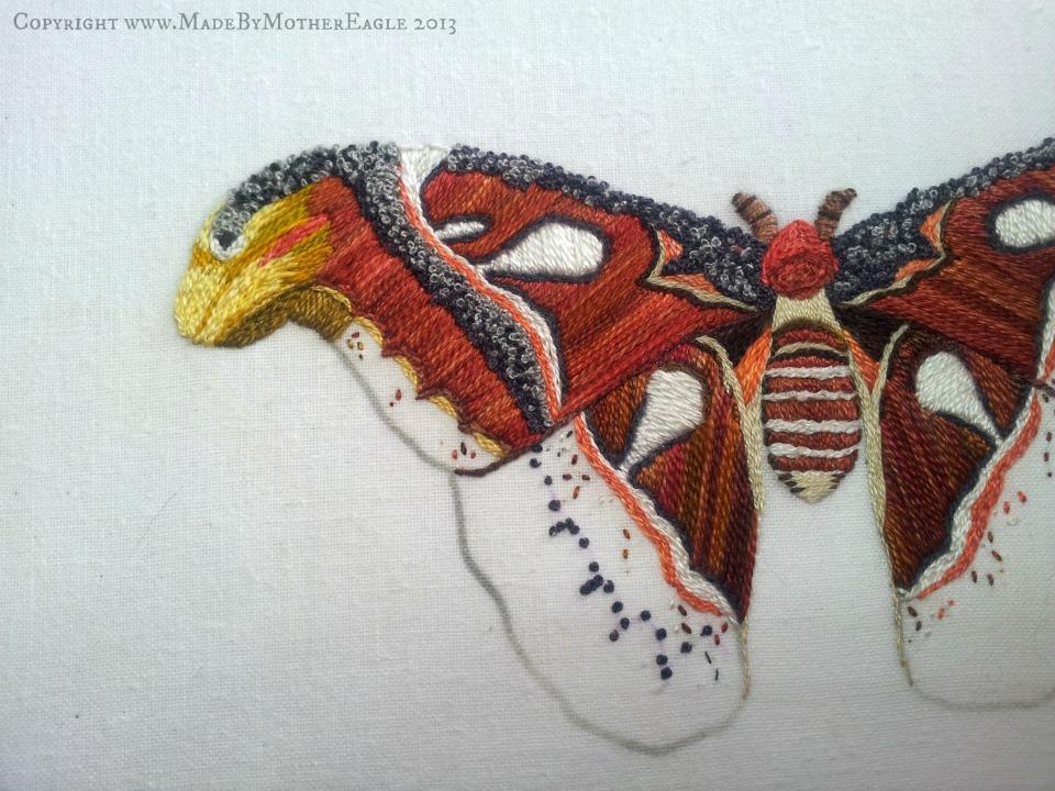 moth23