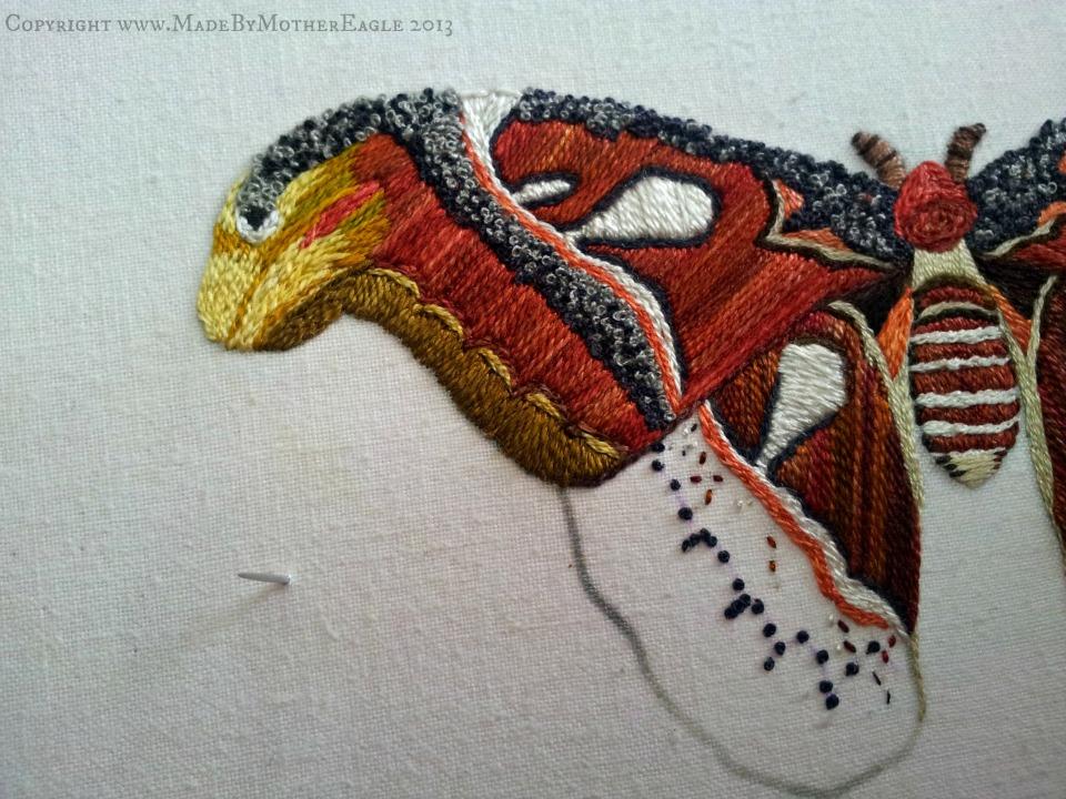 moth24