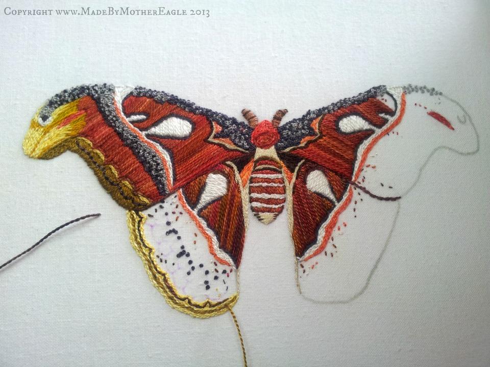 moth25