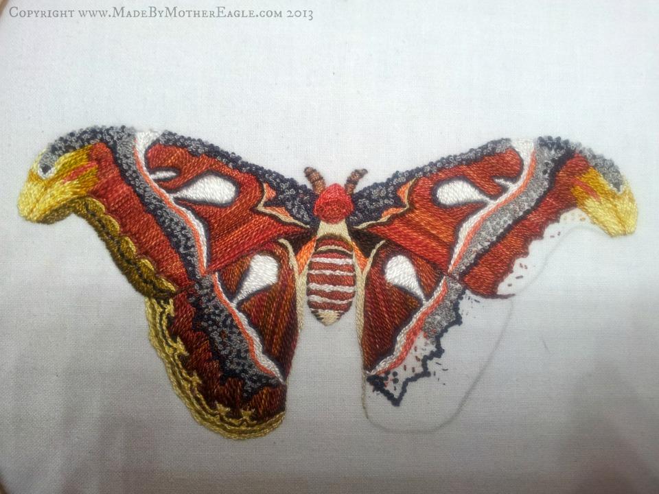 moth30