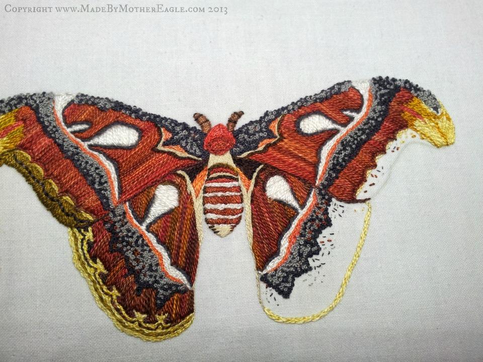 moth31