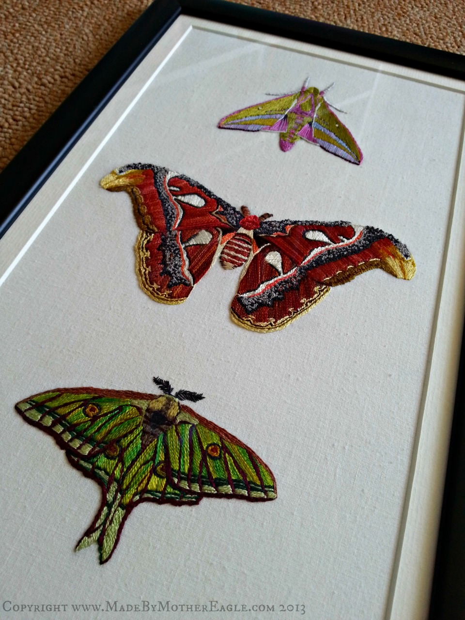 moths framed 3